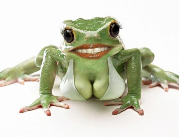 freaky-frog-with-large-breasts-75987